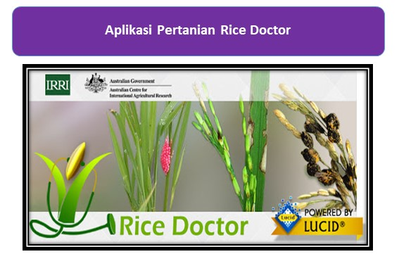 Aplikasi Pertanian Rice Doctor
